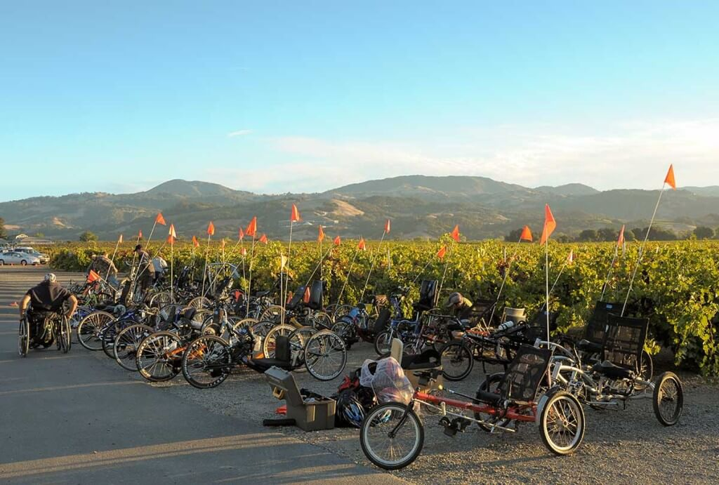 A fleet of adaptice cycles in front of a vineyad at the 2013 Revolution Ride