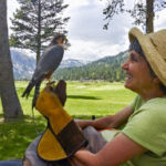 Bonnie from BORP with a bird perched on her hand in the outdoors